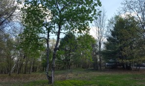 Cove Colony Lot with Lake Rights